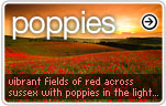 Poppy (Poppies) Photos