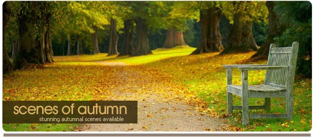 autumn photos of sussex
