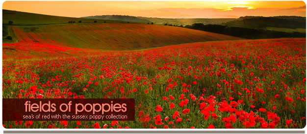 poppy photos sussex