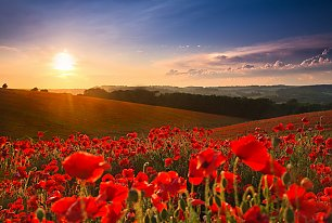 View Poppy Fields Photos >>